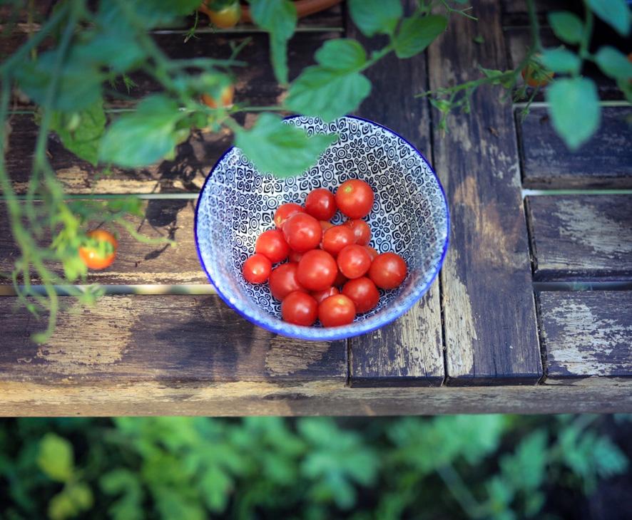 Gartenfotografie